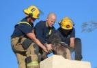Reprodução/Facebook/Tucson Fire Department