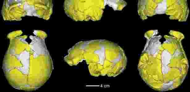 "Xuchang 1 tem cérebro de tamanho ""notável"", segundo especialistas - Science"