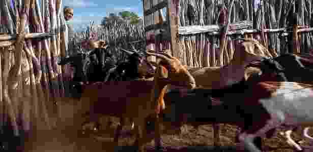 Reforma cabras - Lilo Clareto/Repórter Brasil - Lilo Clareto/Repórter Brasil