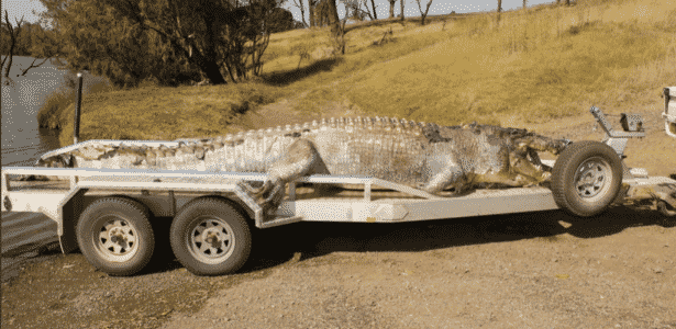 Morte de crocodilo de 5 m vira caso de polícia e gera ainda mais medo na Austrália - Reprodução/Twitter - Reprodução/Twitter