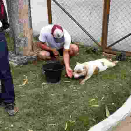 Veterinário dá assistência a cachorro que teve patas machucadas após por ser obrigado a caminhar por 11 km em Maceió - Instituto de Meio Ambiente de Alagoas