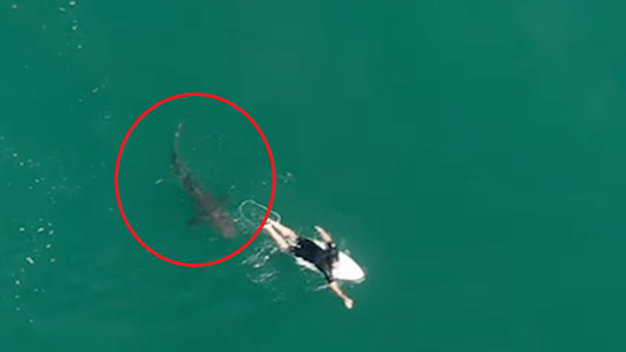 Surfista Matt Wilkinson se assusta ao nadar com tubarão branco de 1,5 metro - Reprodução/Surf Life Saving NSW