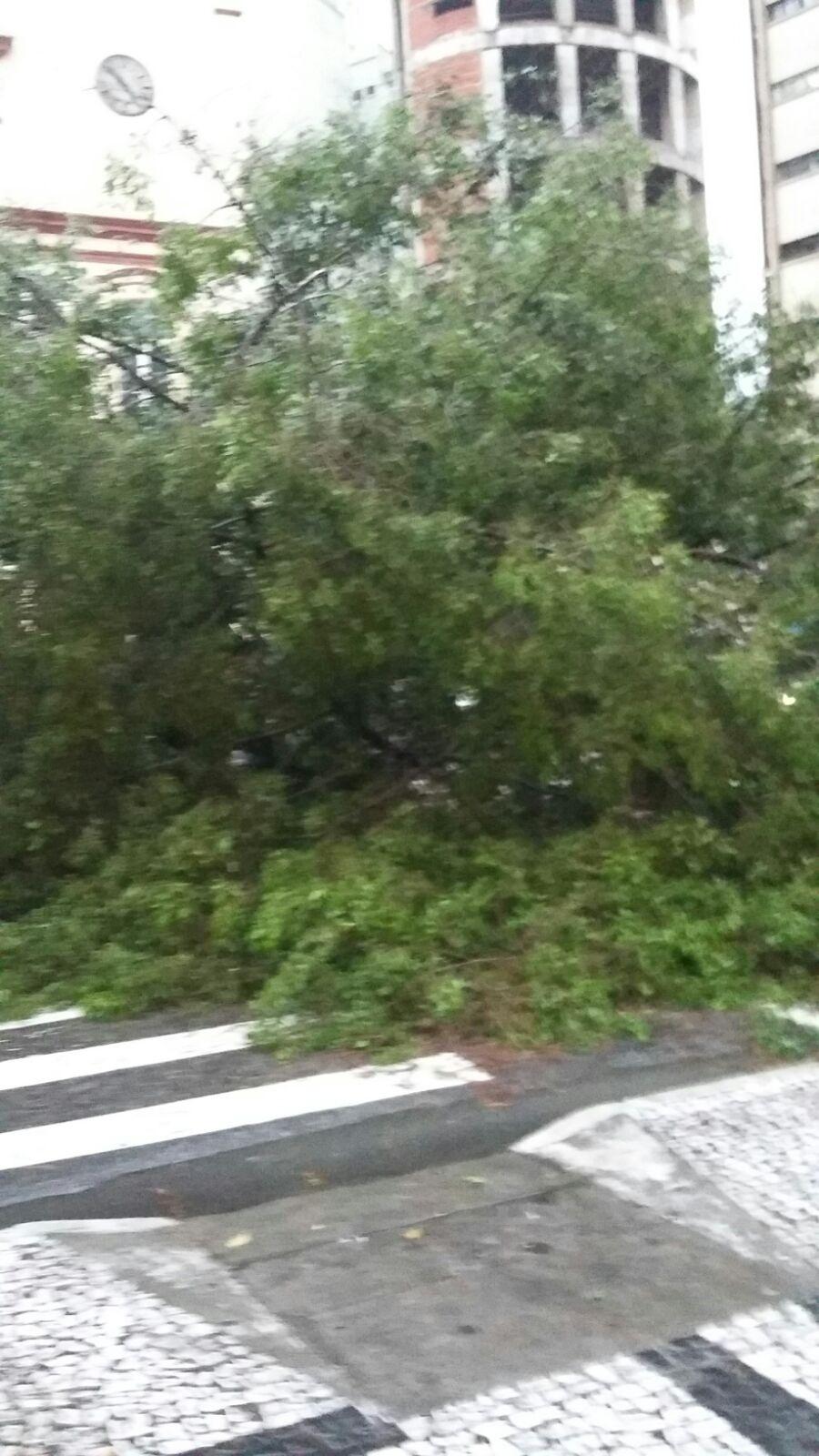 8.set.2015 - Uma árvore caiu na tarde desta terça-feira na praça da Sé. A foto foi enviada pela internauta Lígia Góes via WhatsApp
