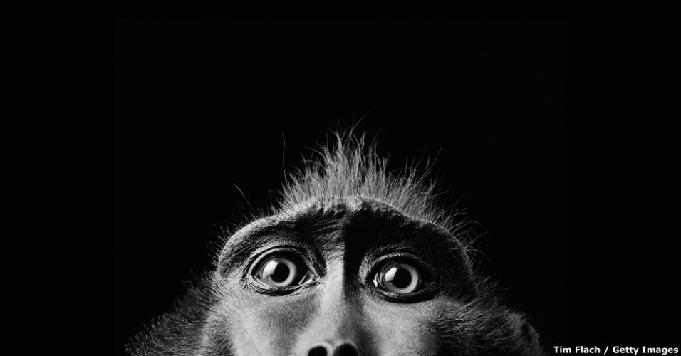 11.mar.2016 - São cerca de 150 imagens em grande formato retratando exemplares de flora e fauna colhidas por fotógrafos internacionais. Uma delas é esta, que mostra bem de perto os olhos de um macaco da espécie 'Macaca nigra'