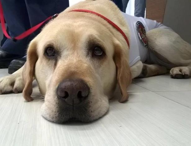 O cão Ice, que já participou de vários resgates e ganhou prêmios internacionais, será agora terapeuta em um hospital