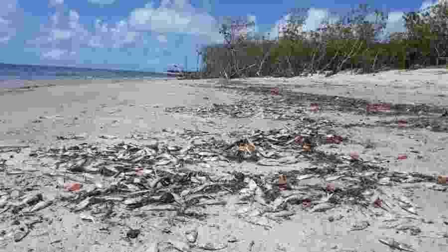 Meia tonelada de peixe é encontrada morta em praias em Alagoas - Divulgação/Pesquisa Ecológica de Longa Duração da Costa dos Corais