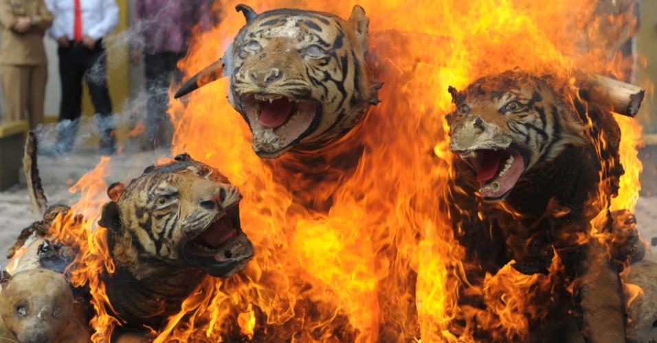 """23.mai.2016 - Tigres empalhados, marfim e outros """"troféus"""" da fauna selvagem apreendidos em operações recentes são incendiados por autoridades da Indonésia em Banda Aceh. O ato faz parte de campanha do governo e de ONG de conservação natural da região contra a caça ilegal"""