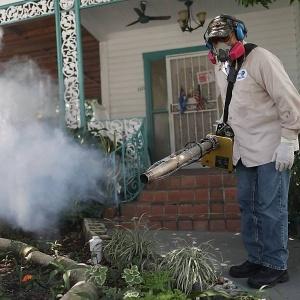 Zika causa preocupação e terror mundial
