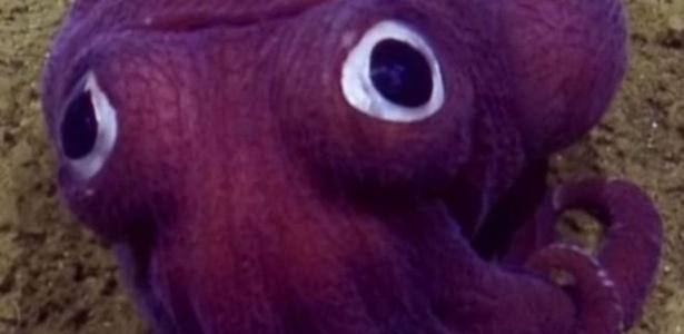 Estranho animal roxo apareceu no fundo do oceano e foi flagrado por expedição