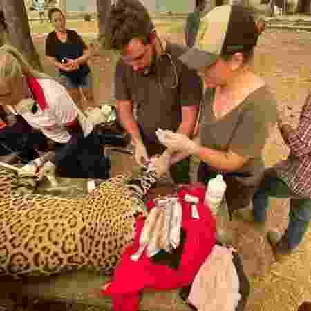 Grupo liderado por Eduarda (de boné) resgatou onça-pintada vítima do fogo no Pantanal - Jaguar Ecological Reserve - Jaguar Ecological Reserve