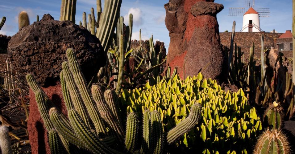 22.abr.2016 - Aprecie, mas não toque. Mais de 1400 espécies de cactus crescem num jardim na ilha Lanzarote, na Espanha, onde o tempo é quente o ano todo