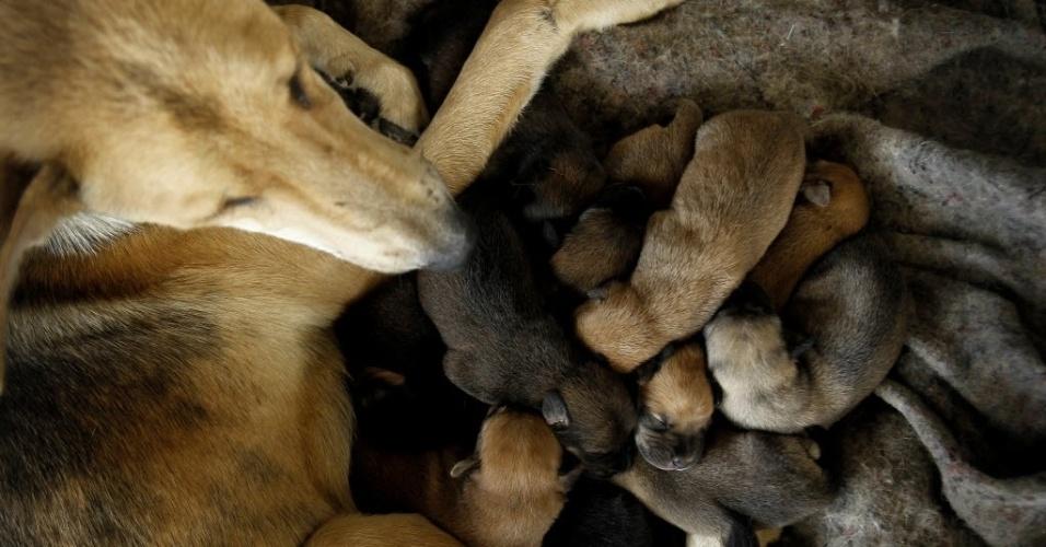 """29.abr.2016 - Um santuário de cães abriga cerca de 750 animais no território de Zaguates, na Costa Rica. O local é apelidado de """"paraíso dos vira-latas"""" e é financiado por donativos, que garantem a comida, os cuidados médicos e o carinho dado pelos cuidadores.Todos os animais estão para adoção"""
