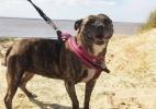 Reprodução/Facebook/Freshfields Animal Rescue