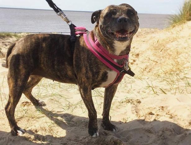"""Freya era considerada a """"cachorrinha mais solitária do mundo"""", e agora virou estrela!"""