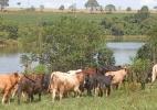 Egito e Chile retomam importações de carne brasileira (Foto: Dirceu Portugal/Fotoarena/Estadão Conteúdo)