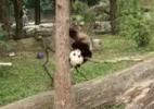 Twitter/ National Zoo?