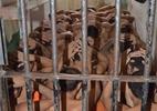 NOTA PÚBLICA #30 - Em defesa do Comitê de Prevenção e Combate à Tortura