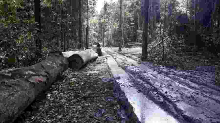 Resultado de estudo de universidade americana é o dobro do desmatamento registrado pelo Inpe no período - Agência Pará