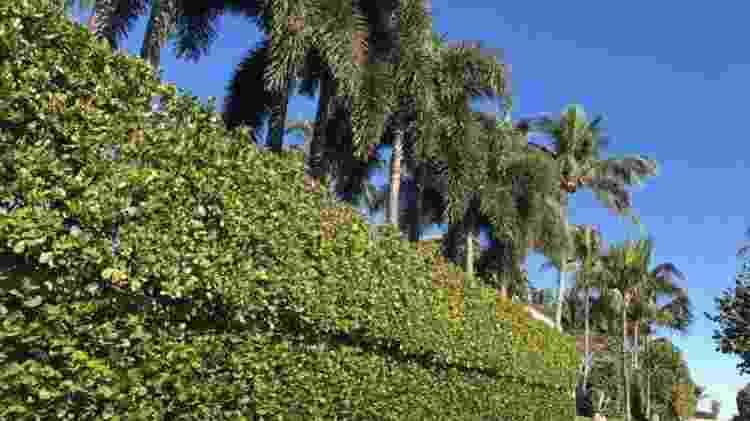 As propriedades em Palm Beach costumam ser muito isoladas do exterior - BBC MUNDO - BBC MUNDO