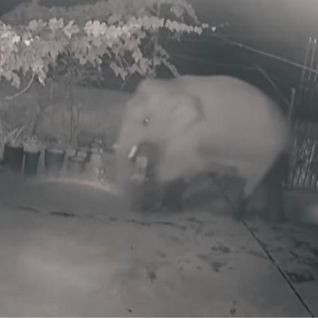 Security Camera Shows Elephant Invasion In China - Playback / YouTube - Playback / YouTube