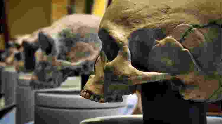 Uma das causas possíveis para o desaparecimento dos neandertais é a consanguinidade - Getty Images - Getty Images