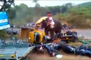 No início do mês, um elefante furioso destruiu 27 carros na Índia