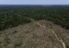 Pecuária ameaça floresta amazônica na fronteira do Amazonas com Rondônia - Bruno Kelly/Reuters