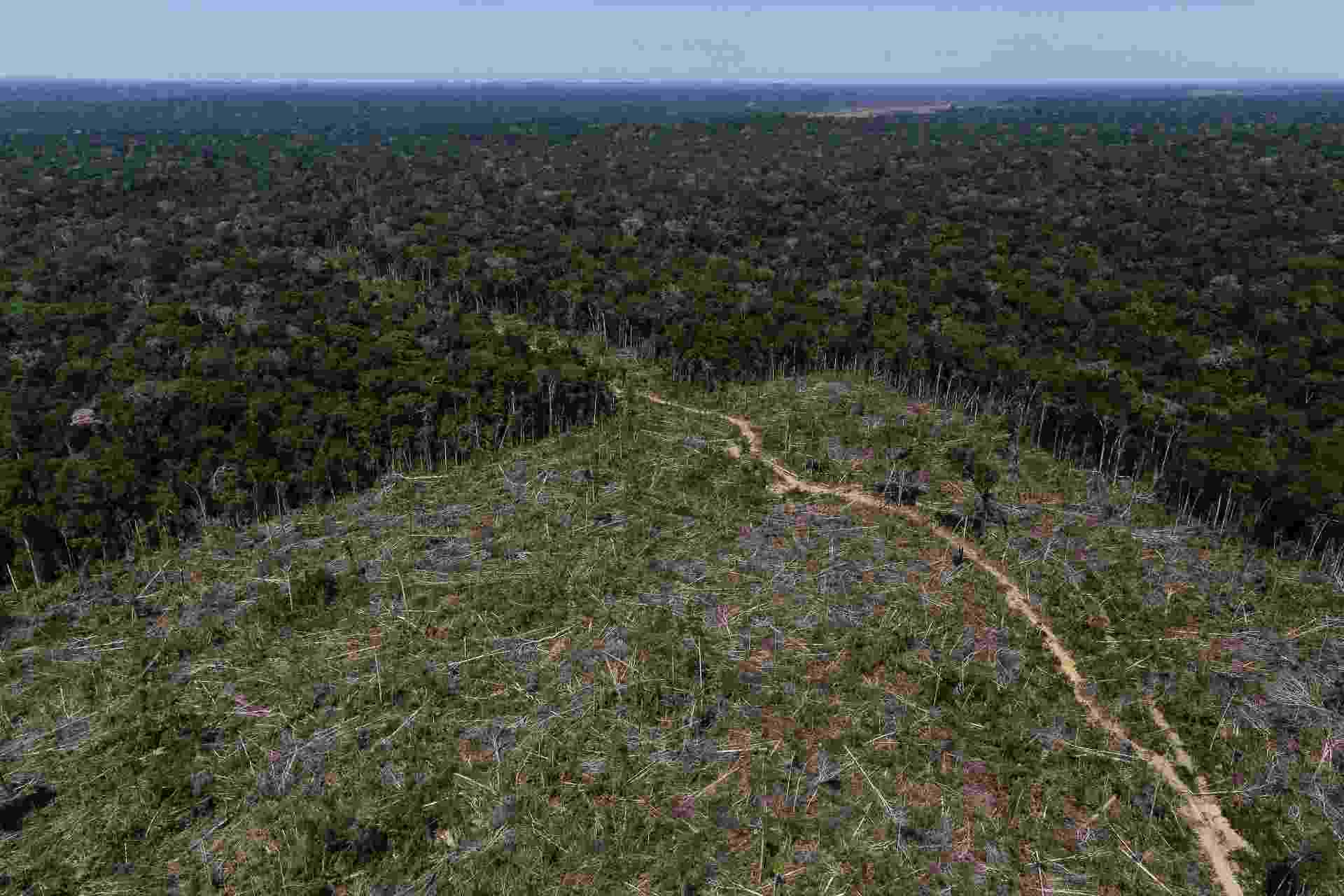 Área de desmatamento em Apuí (AM) é registrada em imagem aérea durante 'Operação Área Verde', realizada pelo Ibama - Bruno Kelly/Reuters
