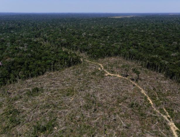 Área de desmatamento em Apuí (AM) é registrada pelo Ibama