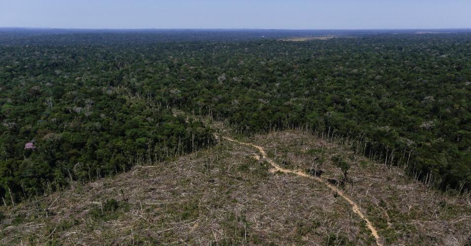 Área de desmatamento em Apuí (AM) é registrada em imagem aérea durante 'Operação Área Verde', realizada pelo Ibama