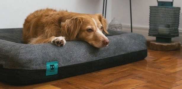 Zee.Dog cama para cachorro