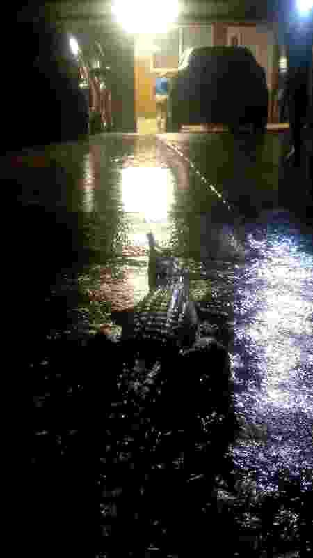 3.fev.2019 - Crocodilo é visto nas ruas de Townsville, na Austrália, durante uma inundação - ERIN HAHN/AFP - ERIN HAHN/AFP