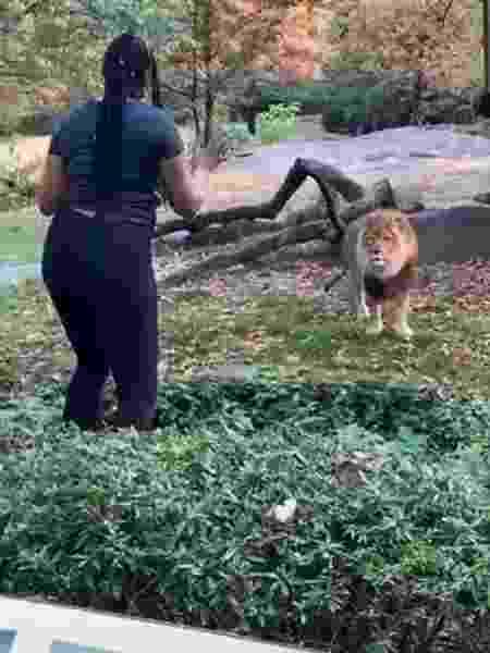 Mulher invadiu barreira de segurança e provocou leão em zoológico nos EUA - Reprodução/Instagram