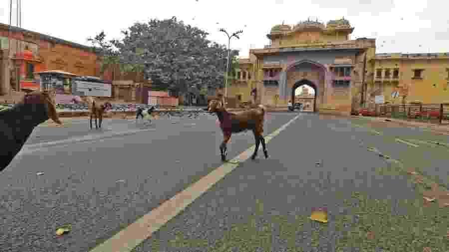 24.03.2020 - Cabras passam por via deserta em Jaipur, na Índia, durante quarentena - Vishal Bhatnagar/NurPhoto via Getty Images