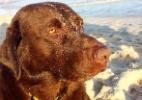 Na praia e no Instagram, cão surfista se destaca e até tira onda - Reprodução/Instagram/@bonosurfdog