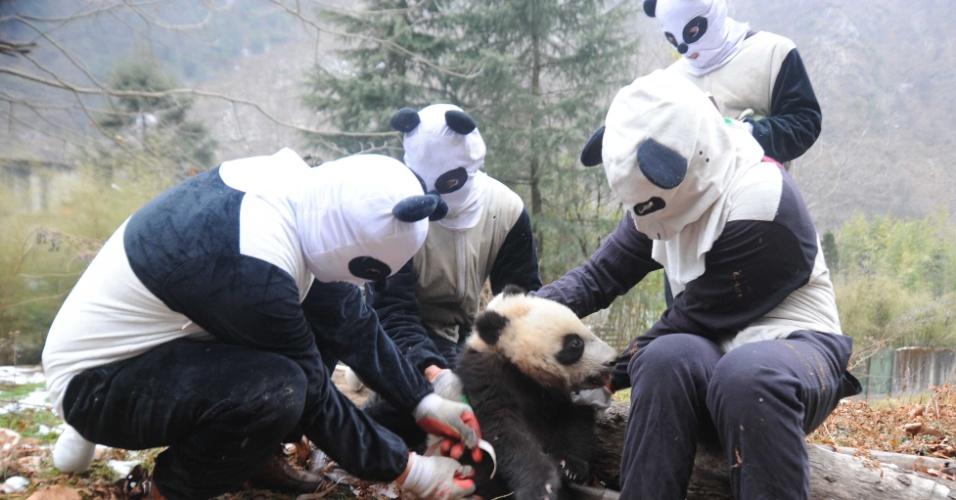 3.fev.2016 - Em foto do dia 27 de janeiro divulgada nesta quarta-feira, funcionários disfarçados de panda realizam exames físicos em filhote da espécie na reserva florestal de Hetaoping, na região central da China. Três filhotes de panda nasceram na reserva em 2016
