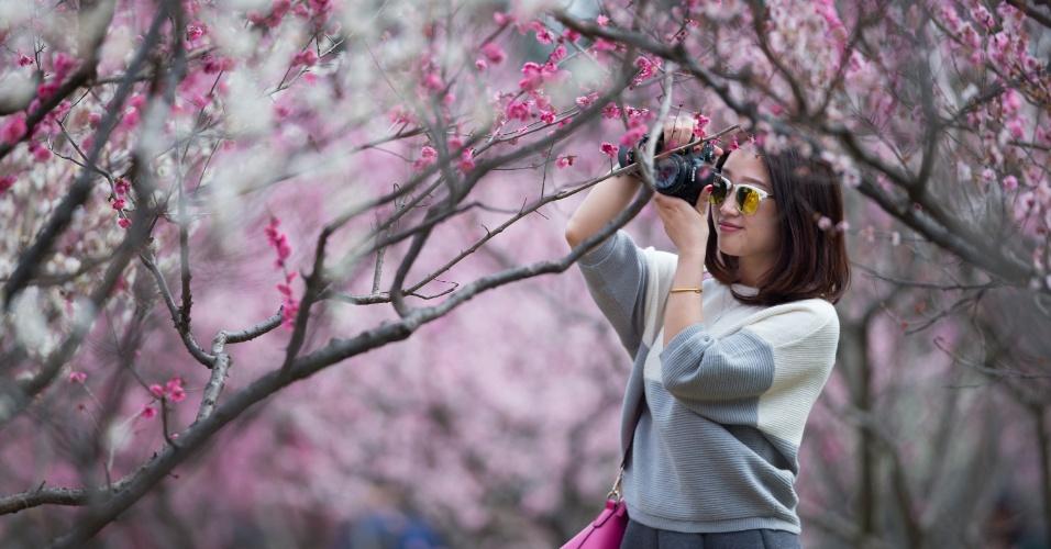 28.fev.2016 - Mulher tira fotos de flores de ameixa em Nanjing, capital da província de Jiangsu, na China