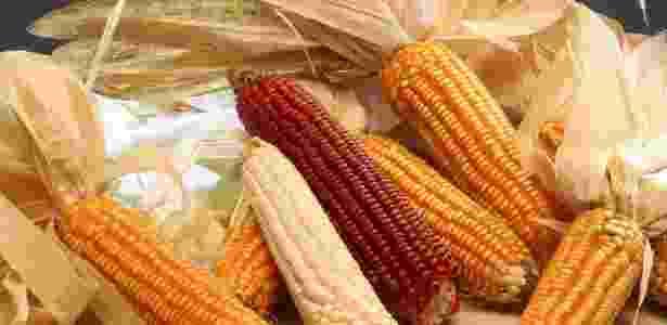 Variedades de milho - Paulo Luiz Lanzetta Aguiar/Embrapa - Paulo Luiz Lanzetta Aguiar/Embrapa