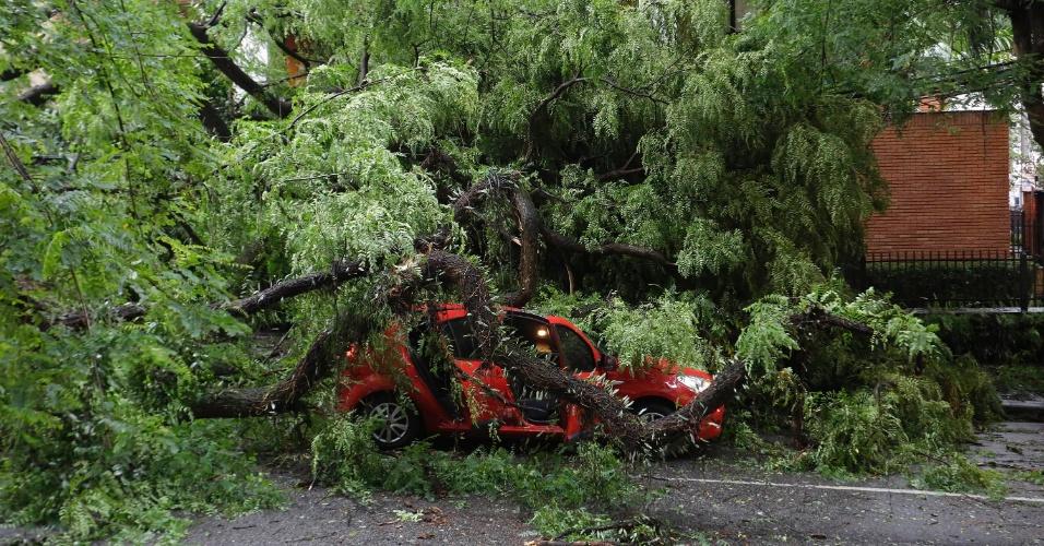 21.dez.2016 - Árvore de grande porte cai na rua Haddock Lobo, no bairro dos Jardins, durante temporal em São Paulo
