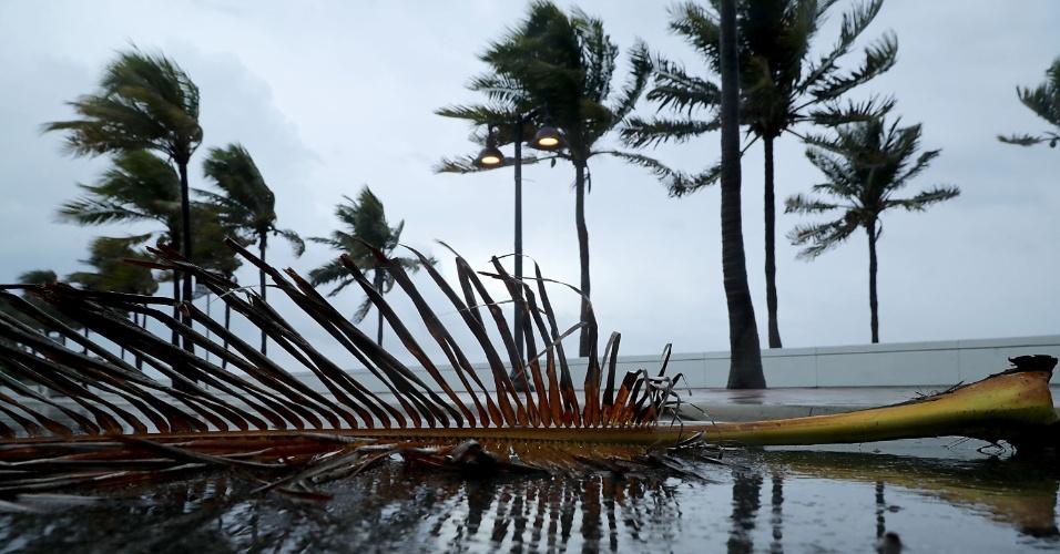 9.set.2017 - Folha de árvore caída em rua de Sebastian Street Beach, durante a expectativa de chegada do furacão Irma a Fort Lauderdale, Flórida