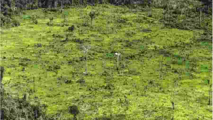 Foto mostra os danos à floresta na terra indígena Ituna Itatá, a mais desmatada do Brasil em 2019 - Juan Doblas/ISA