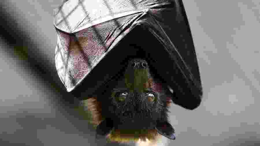 Morcego pode ter infectado humanos - Getty Images