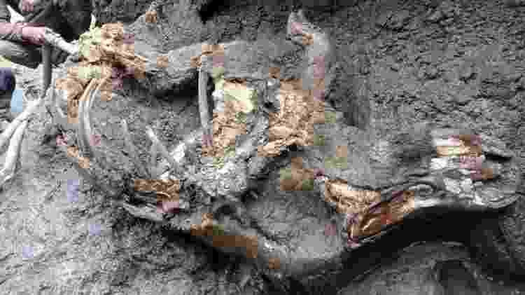 Acredita-se que o rinoceronte tenha vivido há mais de 20 mil anos - Reuters - Reuters