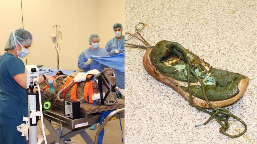 O crocodilo-do-nilo Anuket passou por uma cirurgia feita por veterinários da Universidade da Flórida - Reprodução/Faculdade de Medicina Veterinária da Universidade da Flórida