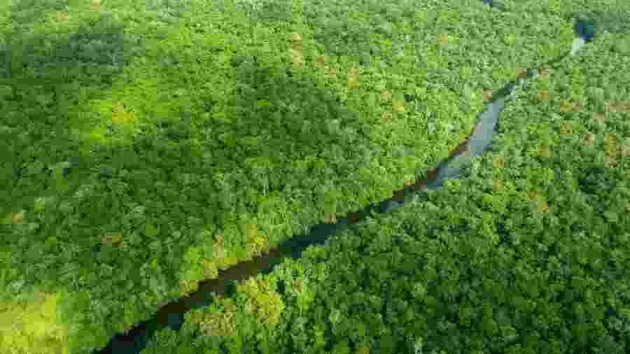 A Noruega é responsável por mais de 90% das doações do Fundo Amazônia - Larissa Rodrigues