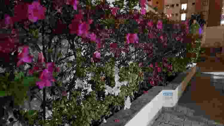 Foto sem modo noturno com a câmera traseira principal do Galaxy Z Flip - Gabriel Francisco Ribeiro/UOL - Gabriel Francisco Ribeiro/UOL