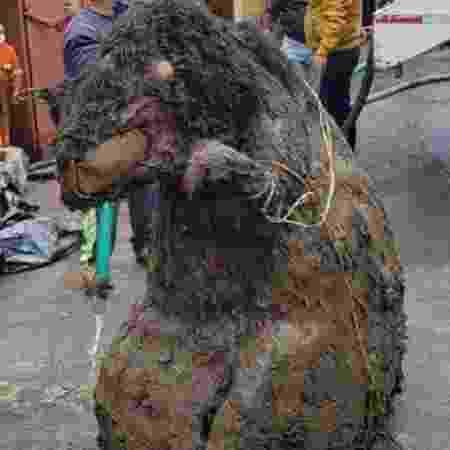 """Um """"rato"""" gigantesco viralizou no México ao ser encontrado no esgoto - Reprodução"""