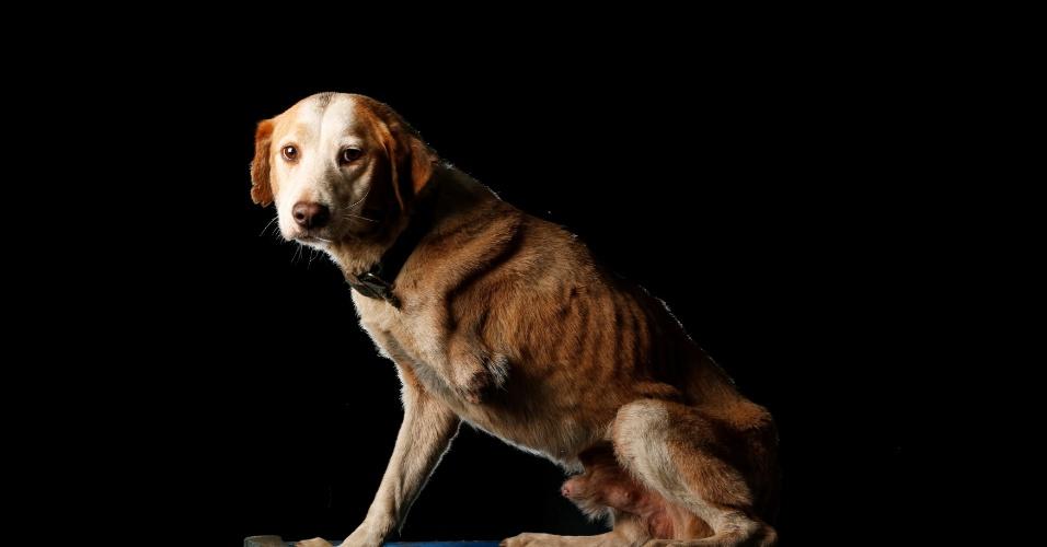 """ATRO - Atro recebeu esse nome de Atropelado. """"Há alguns anos, alguém o deixou no abrigo depois que ele foi atropelado. Ele passou por várias cirurgias para tentar salvar a pata, mas não foi possível. Desde então ele ficou bem solitário, não gosta de interagir com outros cachorros"""", conta Maria Silva, do abrigo Famproa, em Los Teques, na Venezuela"""