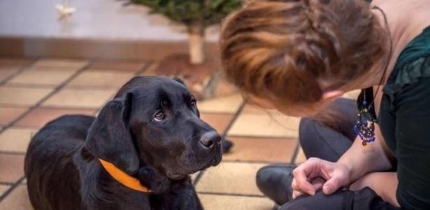 Cães são considerados intermediários do parasita para humanos, e recomendação do Ministério da Saúde é eutanásia - Philippe Huguen/AFP