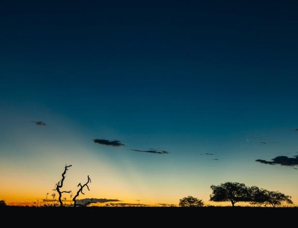 O cerrado reúne a maior biodiversidade da América do Sul e - Gui Gomes/Repórter Brasil